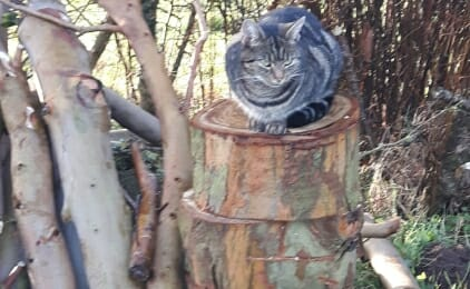 Tommy on logs