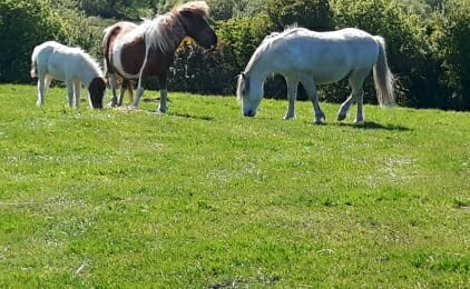 3 Ponies